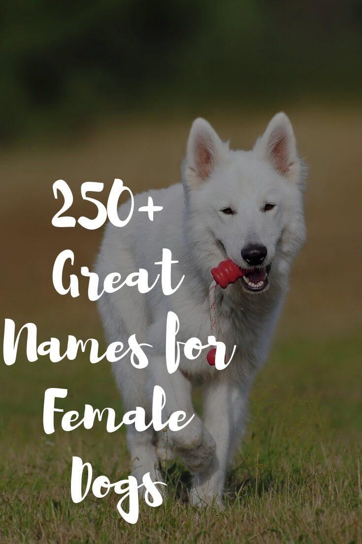 Unique Female Dog Names 2019 - 250+ Popular Girl Puppy Names Ideas