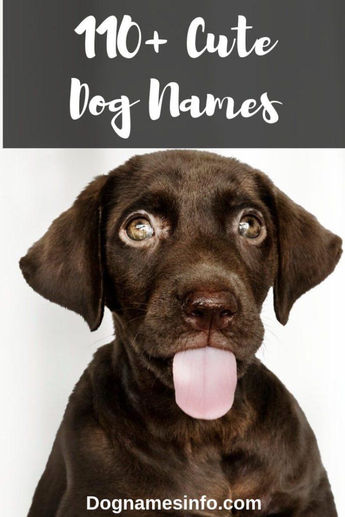 Cute Dog Name Pinterest