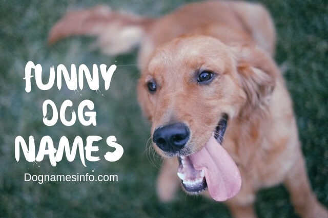 Funny Dog Names 2019 - 200+ Hilarious Puppy Names You Never Seen Before
