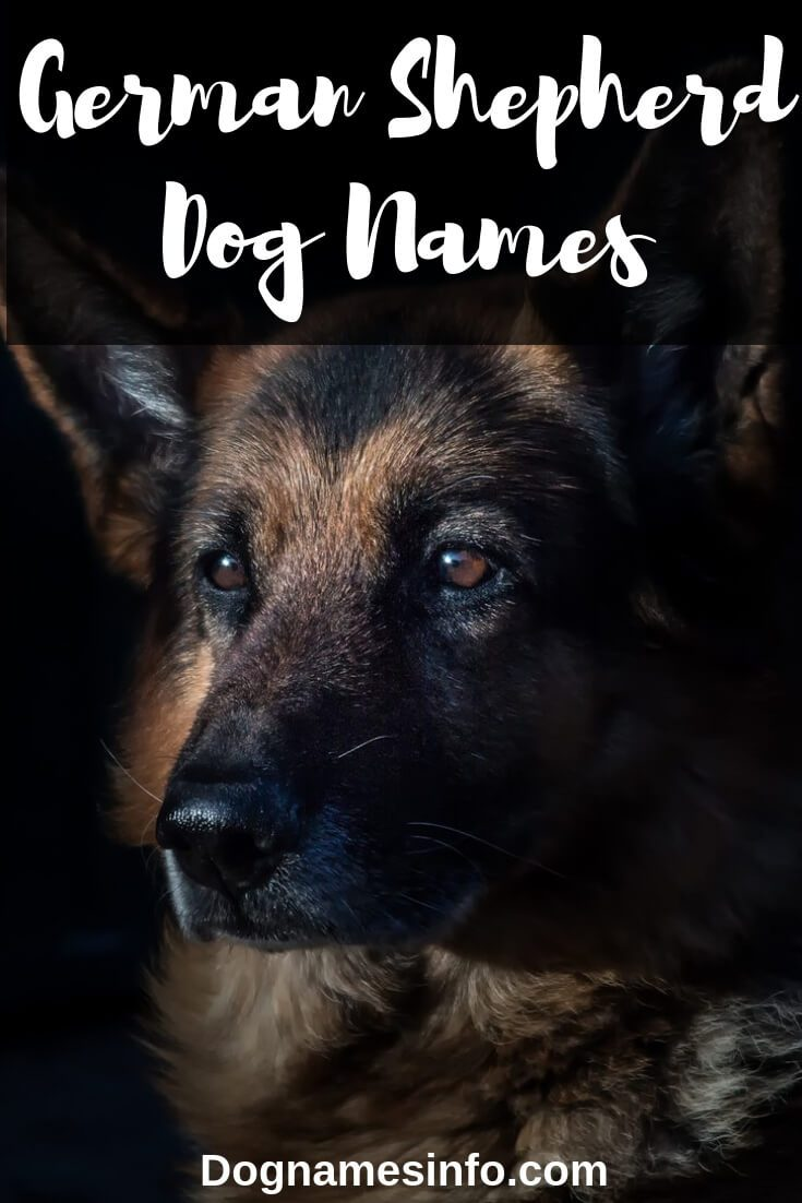 German Shepherd Names Pinterest