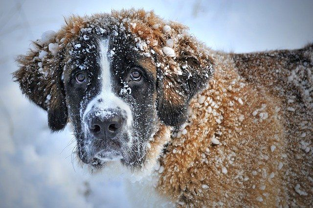 Snow Winter Dog Pet Dog