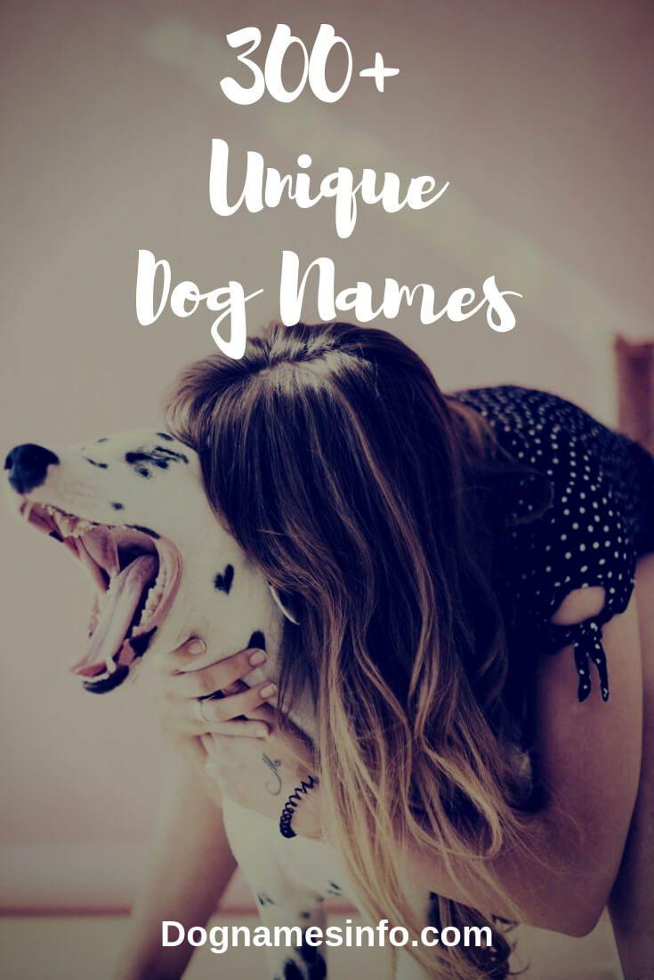 Unique Dog Names 2019 – 300+ Creative Unusual Puppy Names Ideas