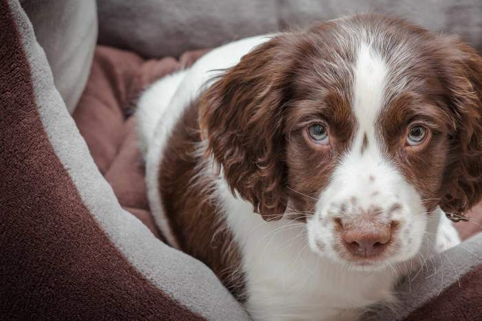 Cute Dog Names 2019 - Over 200 Popular Ideas to Naming Your Puppy