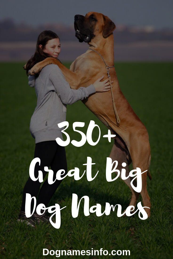 Big dog names pinterest