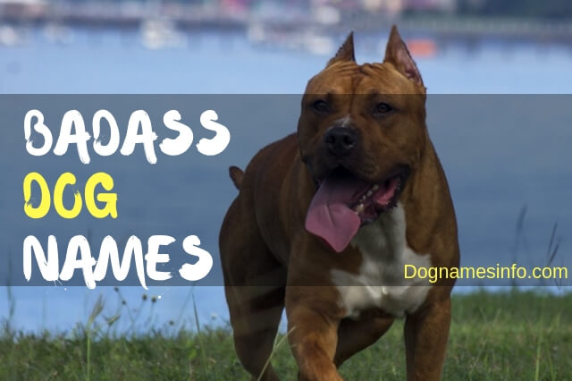 Badass Dog Names 2019 - Famous Names for Tough Male and