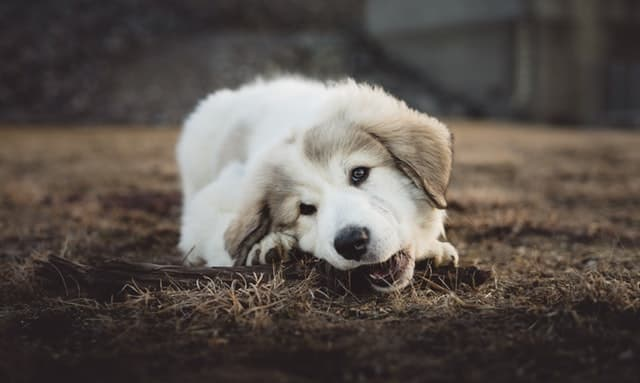 Fluffy Dog Name