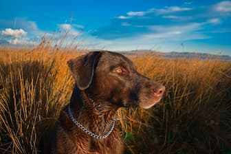Duck Hunting Dog Names