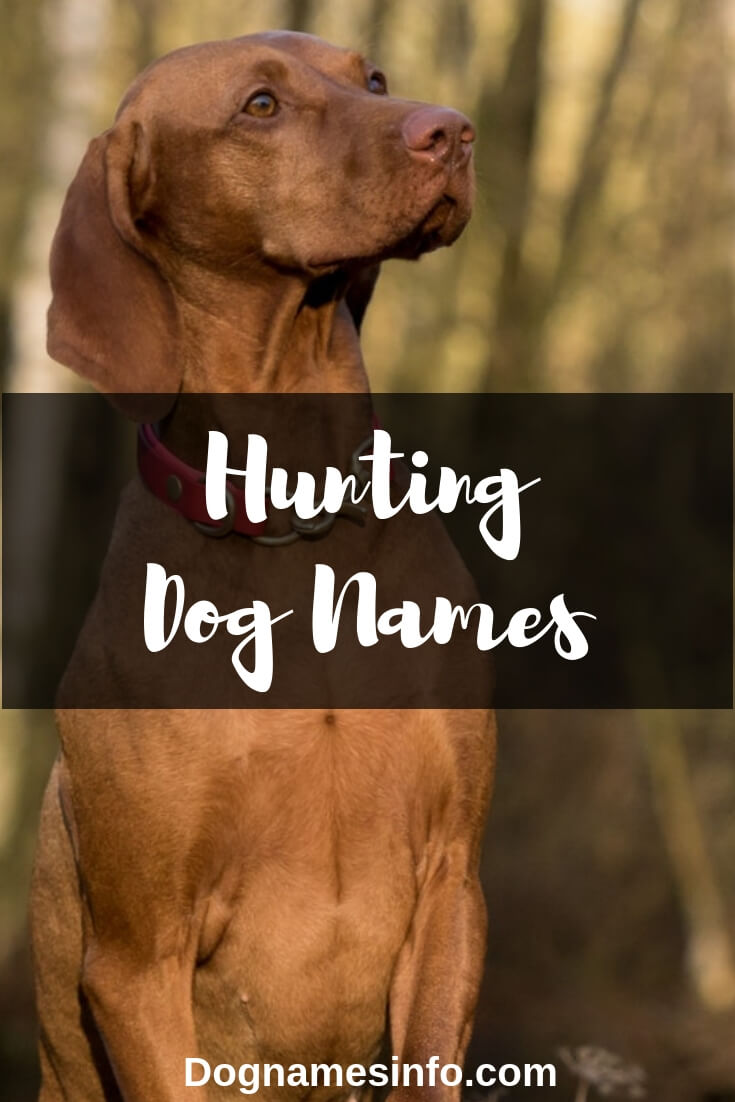 Best Hunting Puppy Names