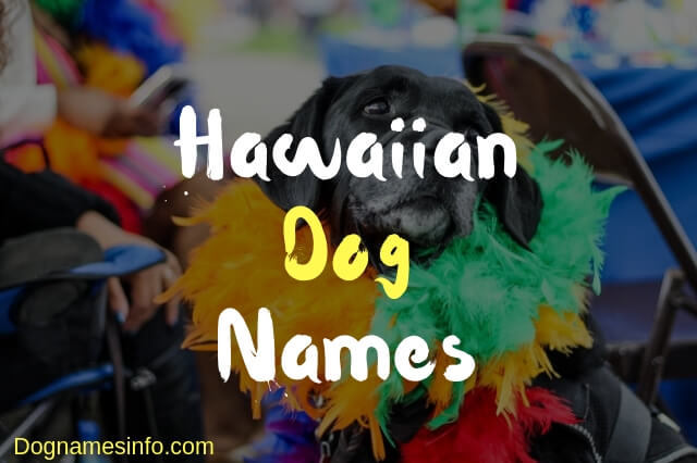 Best Hawaiian Dog Names