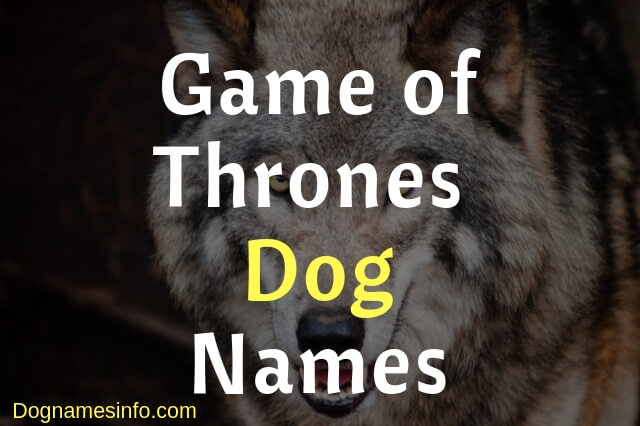 Game of Thrones Dog Names – 150+ Unique Male and Female Names