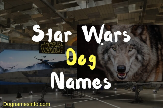 Star Wars Dog Names