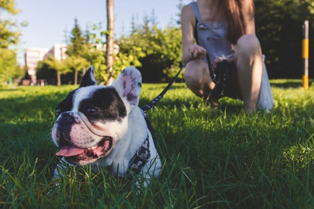 Beautiful Unique French Dog Names