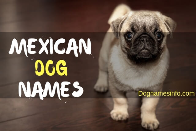 Unique Mexican Dog Names