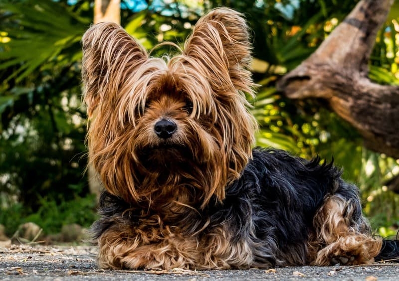 dog-mammal-vertebrate-dog-breed-terrier-small