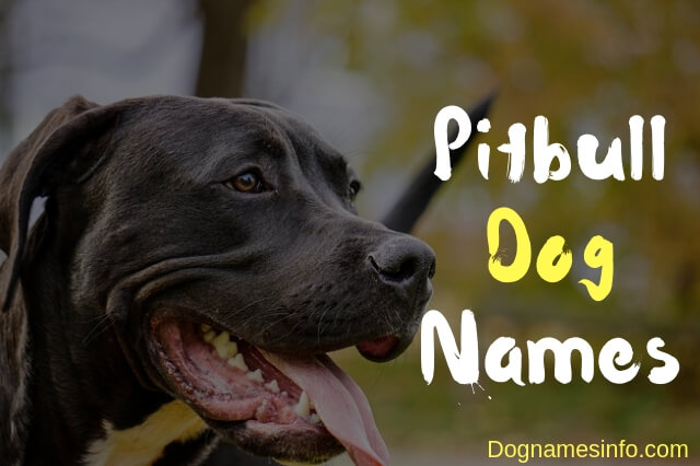 Female Pitbull Dog Names