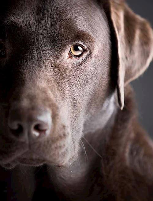 big brown dog name