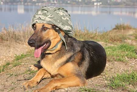 Best Military Dog Names