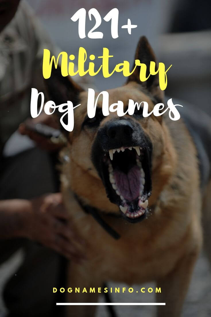 Famous Military Dog Names Female