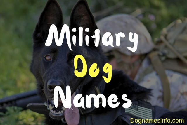 Female Military Dog Names