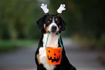 Halloween Male Dog Names