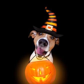 Scary Halloween Dog Names