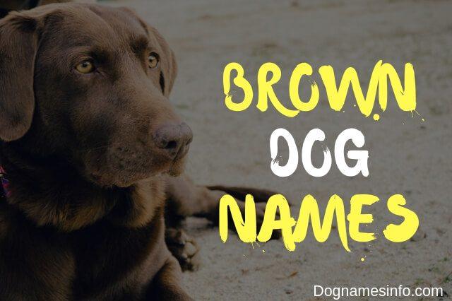 Unique Brown Dog Names