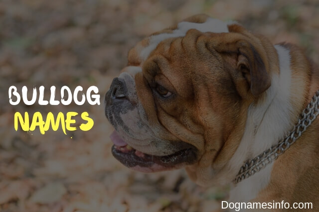 Unique Bulldog Names