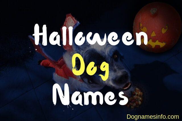 Unique Halloween Dog Names