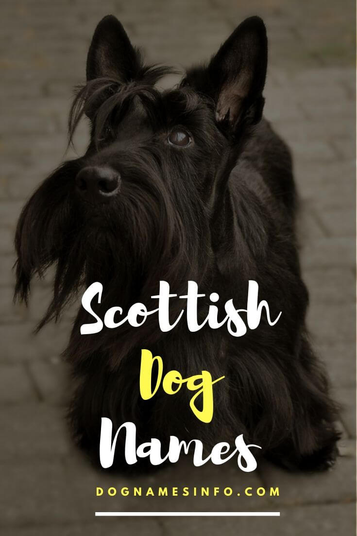 Scottish Names for Dogs