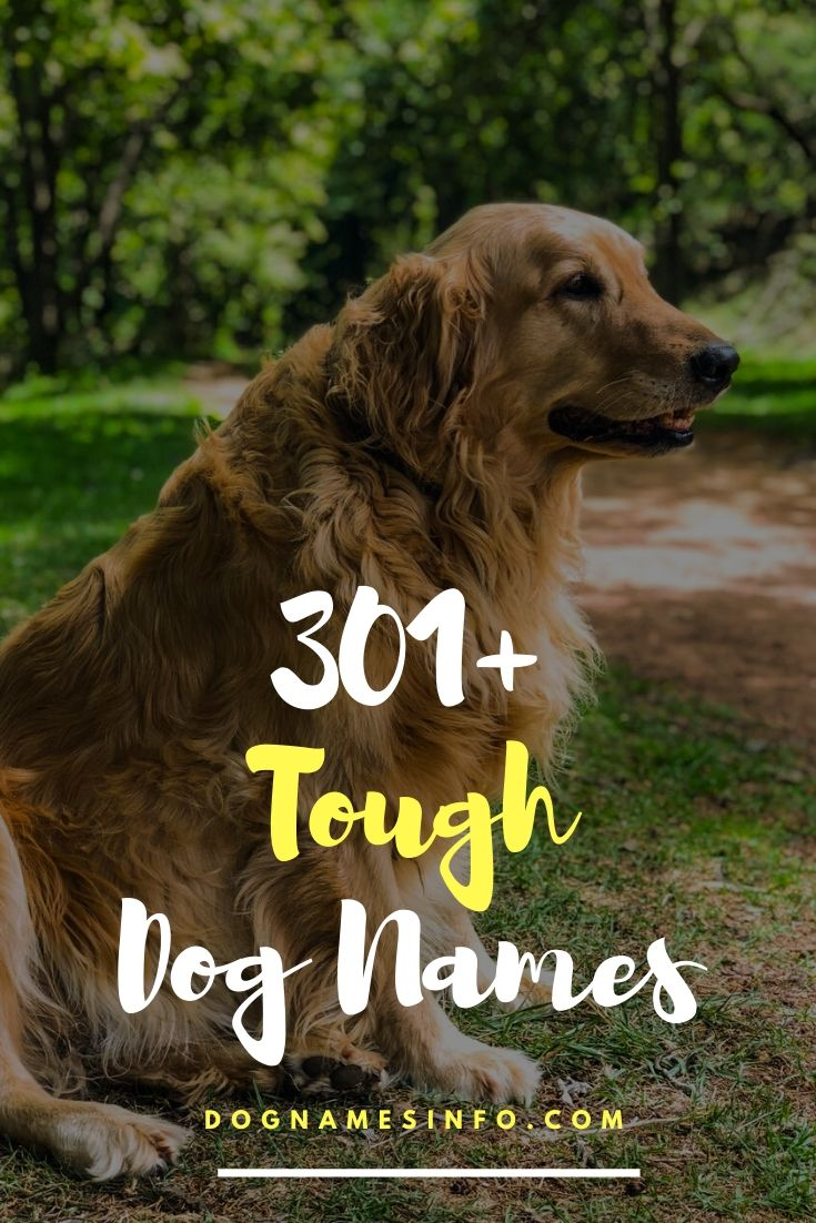 Unique Tough Dog Names 301 Best Names For Scary Strong Dogs