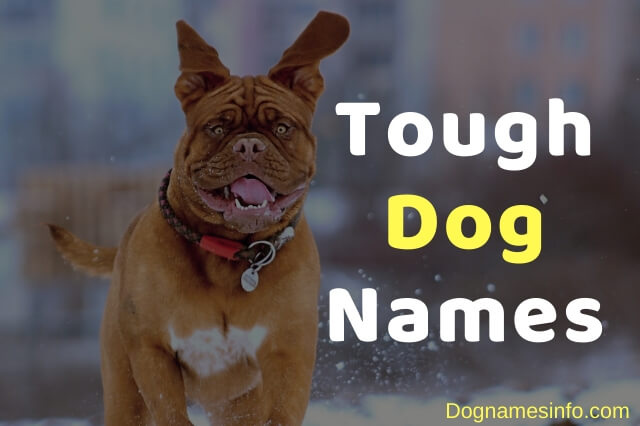 Unique Tough Dog Names