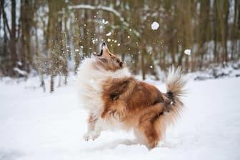 Female Winter Dog Names