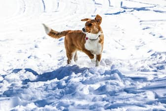 Snow Dog Names and Meanings