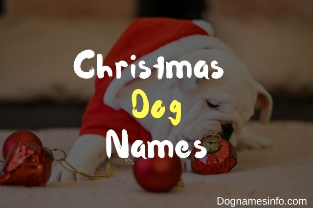 Unique Christmas Dog Names