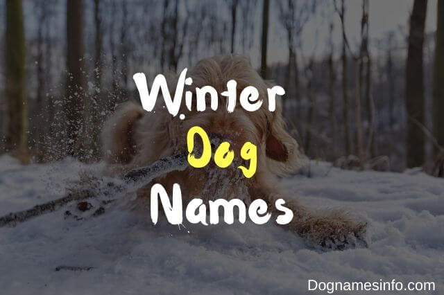Unique Winter Dog Names