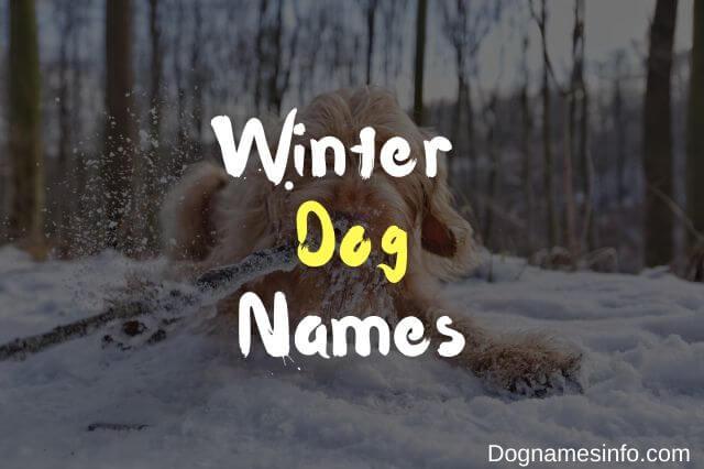 Unique Winter Dog Names