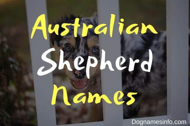 Australian Shepherd Dog Names