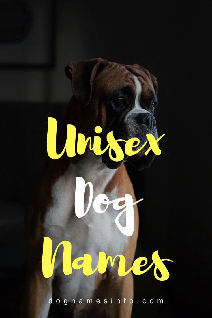 Best Unique Dog Names