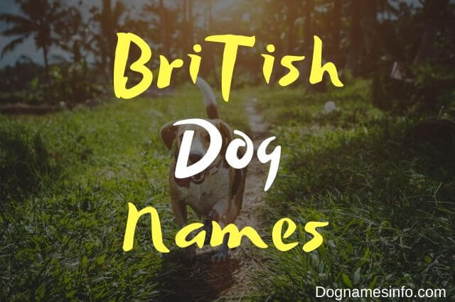 British Dog Names