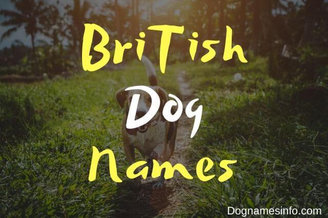 British Dog Names