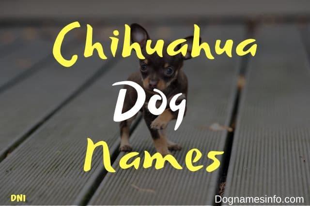 Cute Chihuahua Names