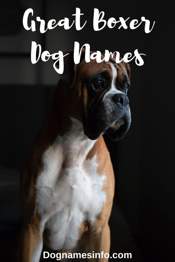 Unique Boxer Dog Names 205 Most Badass Male And Female Puppies
