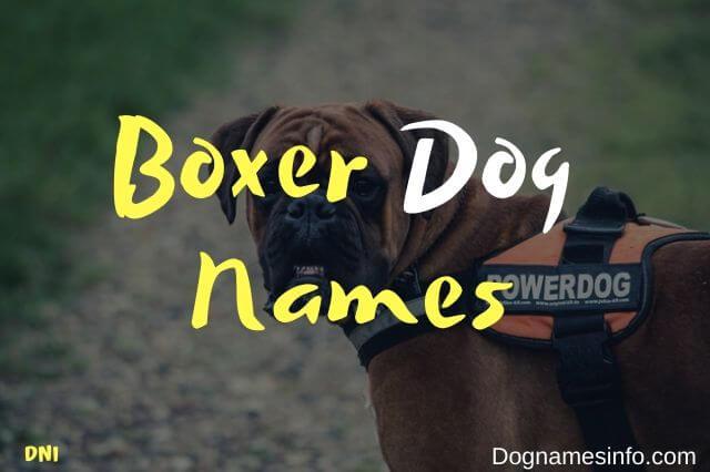 Unique Boxer Dog Names