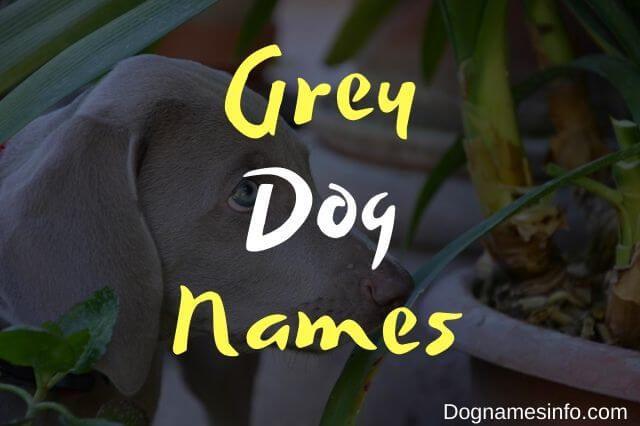 Unique Grey Dog Names