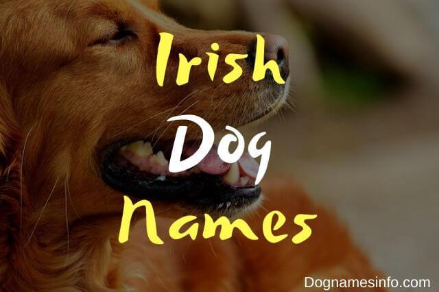 Unique Irish Dog Names