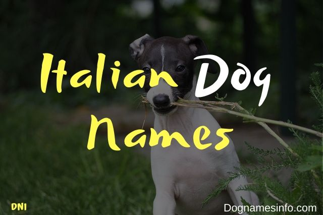 Unique Italian Dog Names