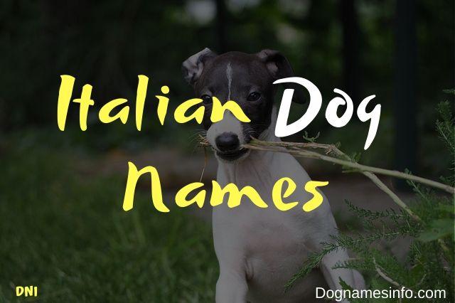 Unique Italian Dog Names