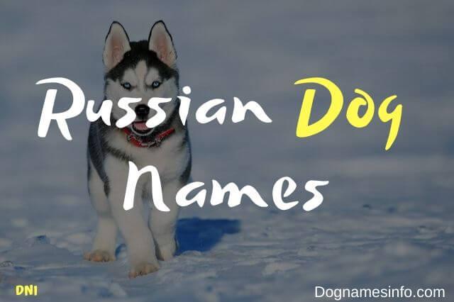 Unique Russian Dog Names