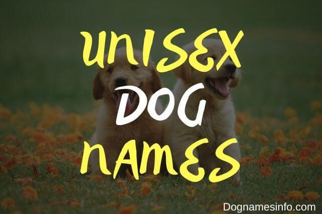 Unique Unisex Dog Names