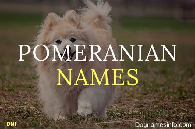 Unique Pomeranian Names